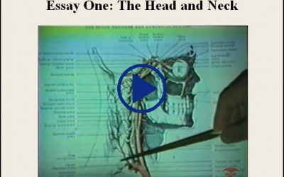 Essay One The Head And Neck