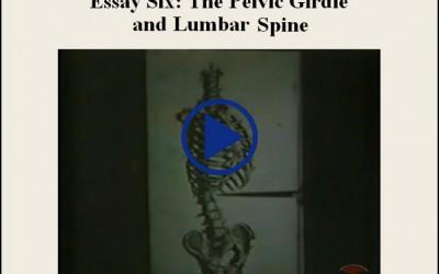 Essay Six The Pelvic Girdle And Lumbar Spine