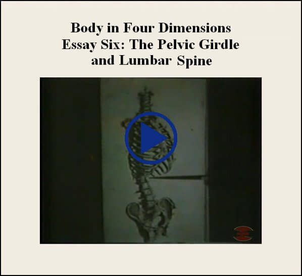 Essay Six The Pelvic Girdle And Lumbar Spine