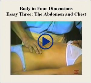 Essay Three The Abdomen And Chest