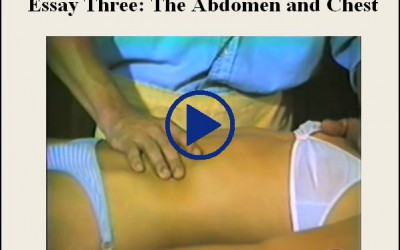 Essay Three The Abdomen And Chest