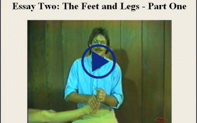 Essay Two The Feet And Legs Part One