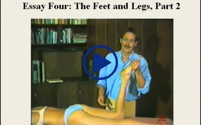 Essay Four The Feet And Legs Part Two