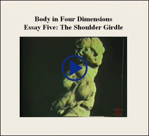 Essay Five The Shoulder Girdle