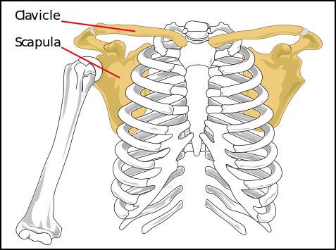 Shoulder girdle workshop December 5-6-2015