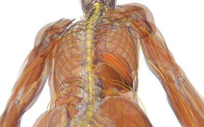 Anatomy & Physiology For Bodyworkers