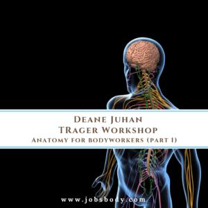 Anatomy for bodyworkers