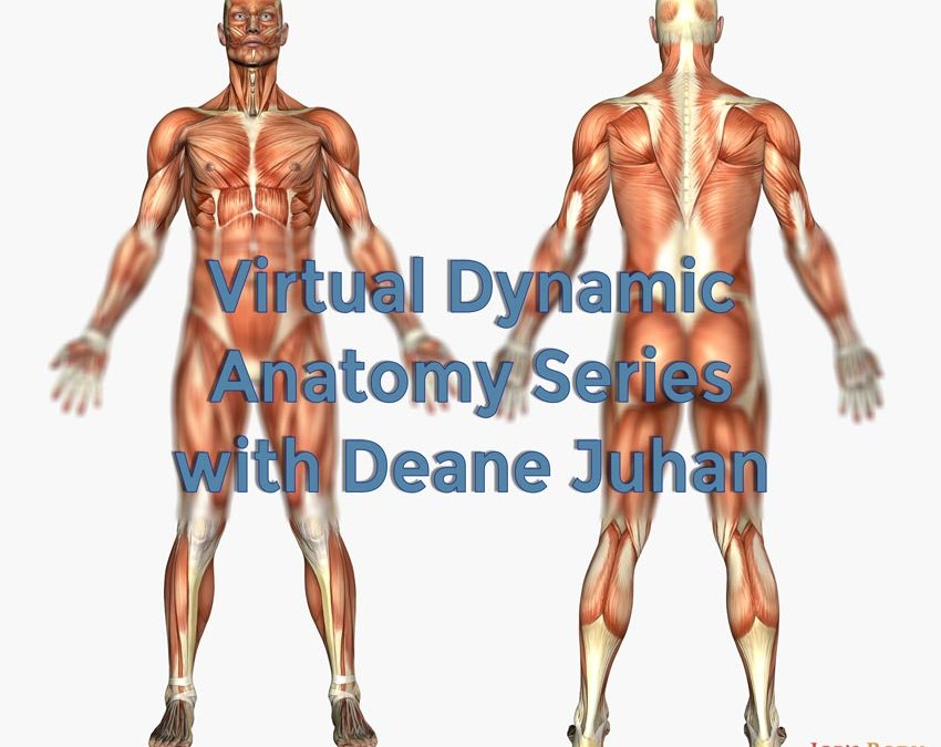 Virtual Dynamic Anatomy Series with Deane Juhan