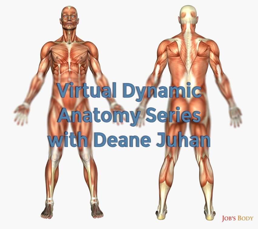 Virtual Dynamic Anatomy Series with Deane Juhan