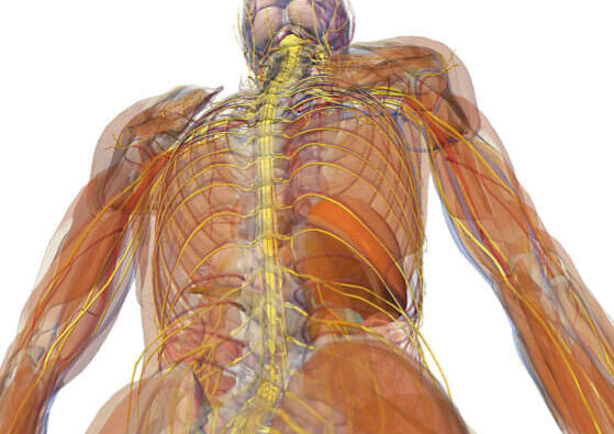 Deane Juhan - Hands and Arms Somatic Movement Therapy - Body Muscles