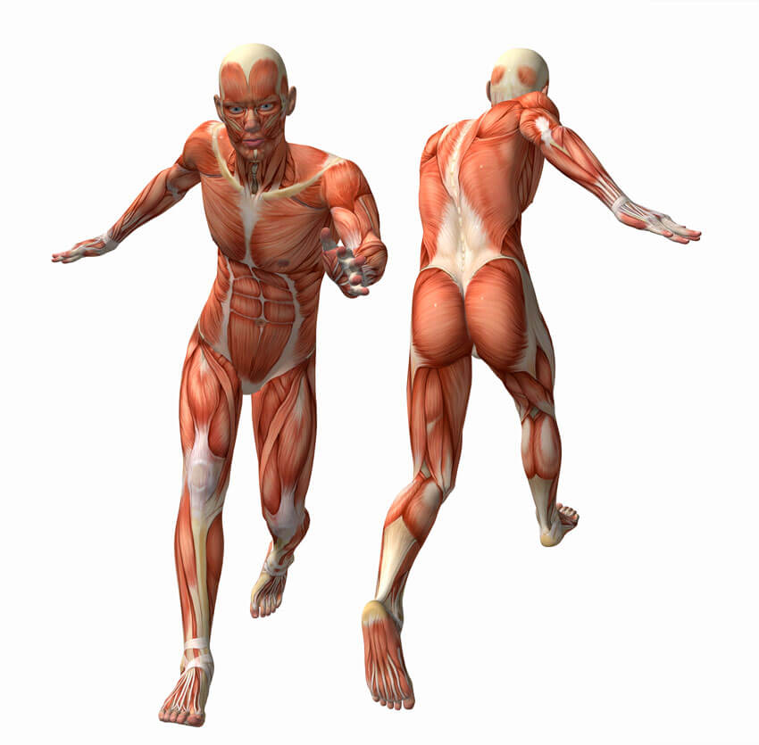 Deane Juhan - Feet and Legs Somatic Movement Therapy - Human Muscles